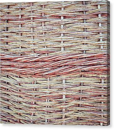 Willow Fiber Canvas Print by Tom Gowanlock