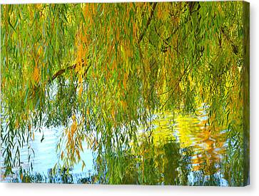 Willow Canvas Print by Tim Reaves