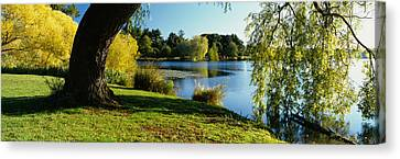 Willow Lake Canvas Print - Willow Tree By A Lake, Green Lake by Panoramic Images