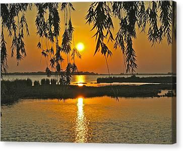 Willow Tree Sunset Canvas Print