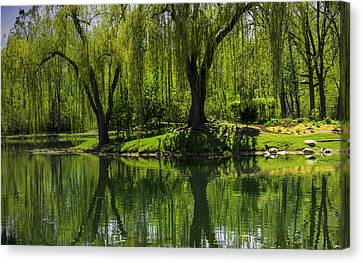 Willows Weep Into Their Reflection  Canvas Print by LeeAnn McLaneGoetz McLaneGoetzStudioLLCcom