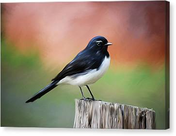 Willy Wagtail Austalian Bird Painting Canvas Print by Michelle Wrighton