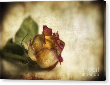 Harmonious Canvas Print - Wilted Rose by Veikko Suikkanen