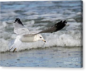 Wind Beneath My Wings Canvas Print by Geoff Crego