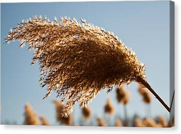 Canvas Print featuring the photograph Wind Blown by David Stine