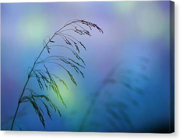 Wind Colors Canvas Print by Guido Montanes Castillo