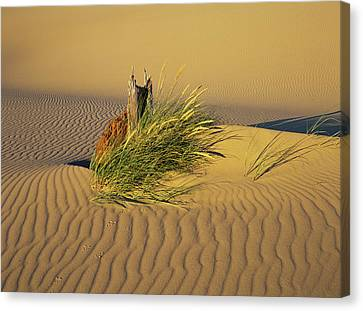 Wind Makes Ripples In The Sand Canvas Print by Robert L. Potts