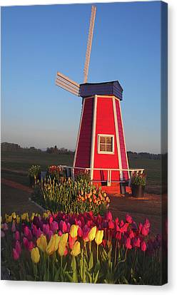 Wind Mill At The Tulip Festival Canvas Print by Michel Hersen