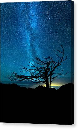 Canvas Print featuring the photograph Chance by Dustin  LeFevre