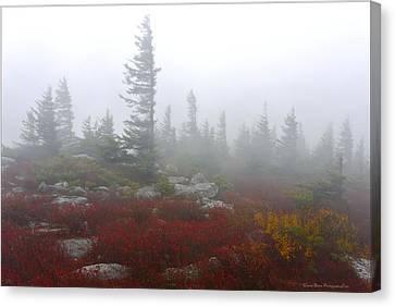 Wind Swept Pines Amongst The Foggy Mist Canvas Print