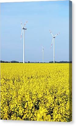 Wind Turbines In Rapeseed Field Canvas Print