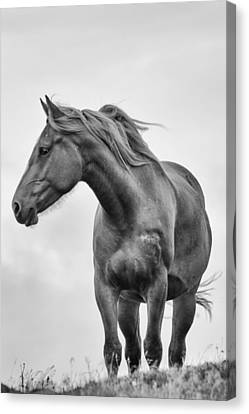 Tracy Munson Canvas Print - Windblown Horse by Tracy Munson