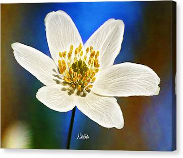 Windflower Whispers Canvas Print by Nikki Marie Smith