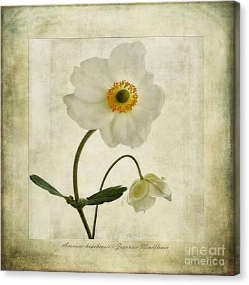 Windflowers Canvas Print by John Edwards