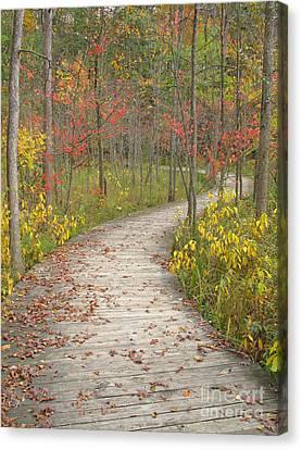 Winding Woods Walk Canvas Print by Ann Horn