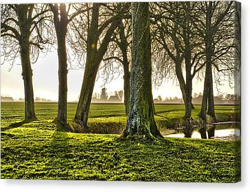 Windmill And Trees In Groningen Canvas Print