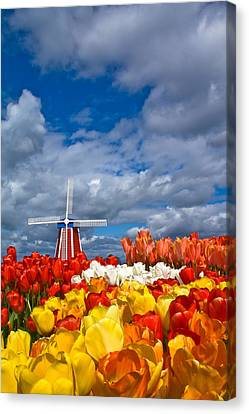 Windmill And Tulips Canvas Print by Patricia Davidson