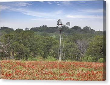 Windmill In A Field Of Texas Wildflowers Canvas Print by Rob Greebon