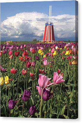 Windmill In The Tulips Canvas Print by Suzy Piatt