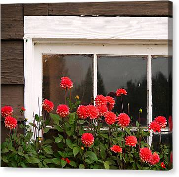 Canvas Print featuring the photograph Window Box Delight by Jordan Blackstone