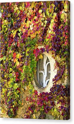 Window Covered In Virginia Creeper Canvas Print by Bob Gibbons