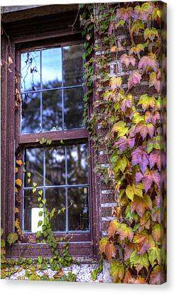 Window In Mayslake Ivy Canvas Print