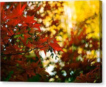 Window Into Fall Canvas Print by Ronda Broatch