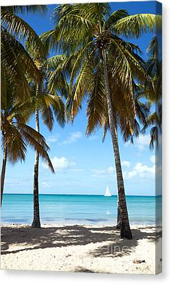 Window On The Caribbean Canvas Print by Matteo Colombo