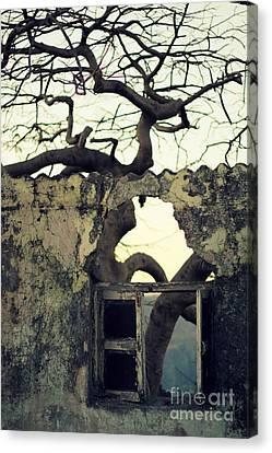 Window Canvas Print by Vishakha Bhagat