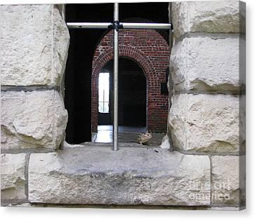 Window Watcher Canvas Print