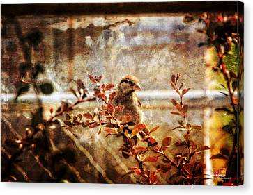 Window Wren Canvas Print by Dan Quam