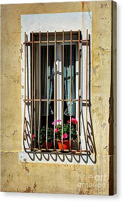 Windows Of Vienne  Canvas Print