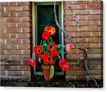 Windows Series - 4 Canvas Print by Haleh Mahbod