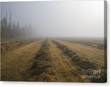 Windrows Canvas Print by Mike  Dawson