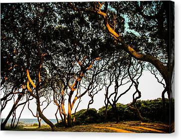 Wind Blown Tree Canvas Print - Winds Of Time by Karen Wiles
