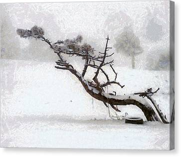 Wind Blown Tree Canvas Print - Windswept by Gun Legler