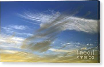 Windswept Canvas Print by Kaye Menner