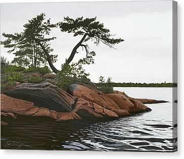 Windswept Canvas Print by Kenneth M  Kirsch