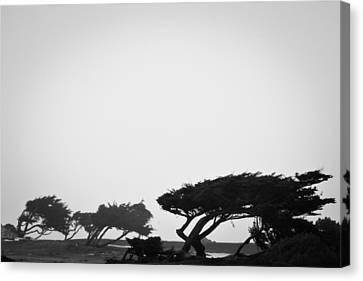 Windswept Shoreline Canvas Print