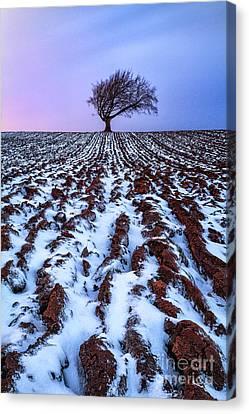 Windswept Tree Scotland Canvas Print by John Farnan
