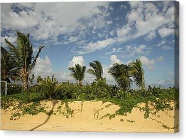 Windy Palms Canvas Print by Mustafa Abdullah