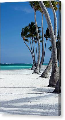 Windy Paradise Canvas Print by Sophie Vigneault