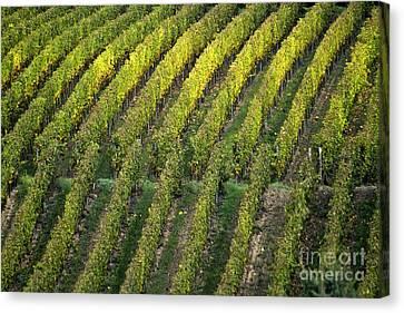 Wine Scene Canvas Print - Wine Acreage In Germany by Heiko Koehrer-Wagner
