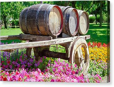 Wine Barrels In Spring At V Sattui Winery Canvas Print