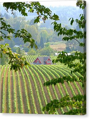 Canvas Print featuring the photograph Wine Country by Debra Kaye McKrill