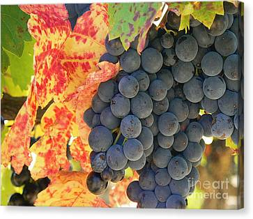Wine Country Canvas Print by France  Art