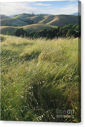 Wine Country Hills Canvas Print by Stu Shepherd