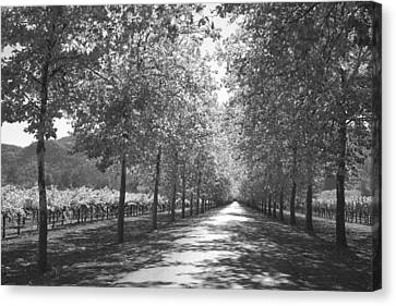Wine Country Napa Black And White Canvas Print by Suzanne Gaff