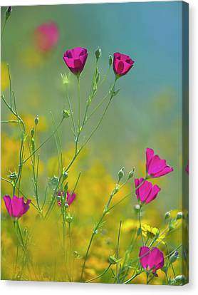 Close Focus Floral Canvas Print - Wine Cups, Texas, Usa by Tim Fitzharris