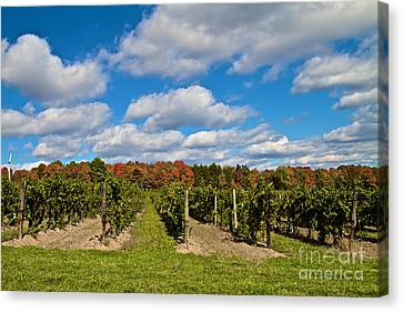 Wine In Waiting Canvas Print by William Norton